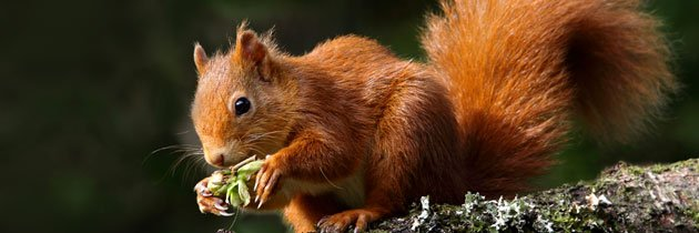Support our squirrel appeal (c) Ronnie Stokes