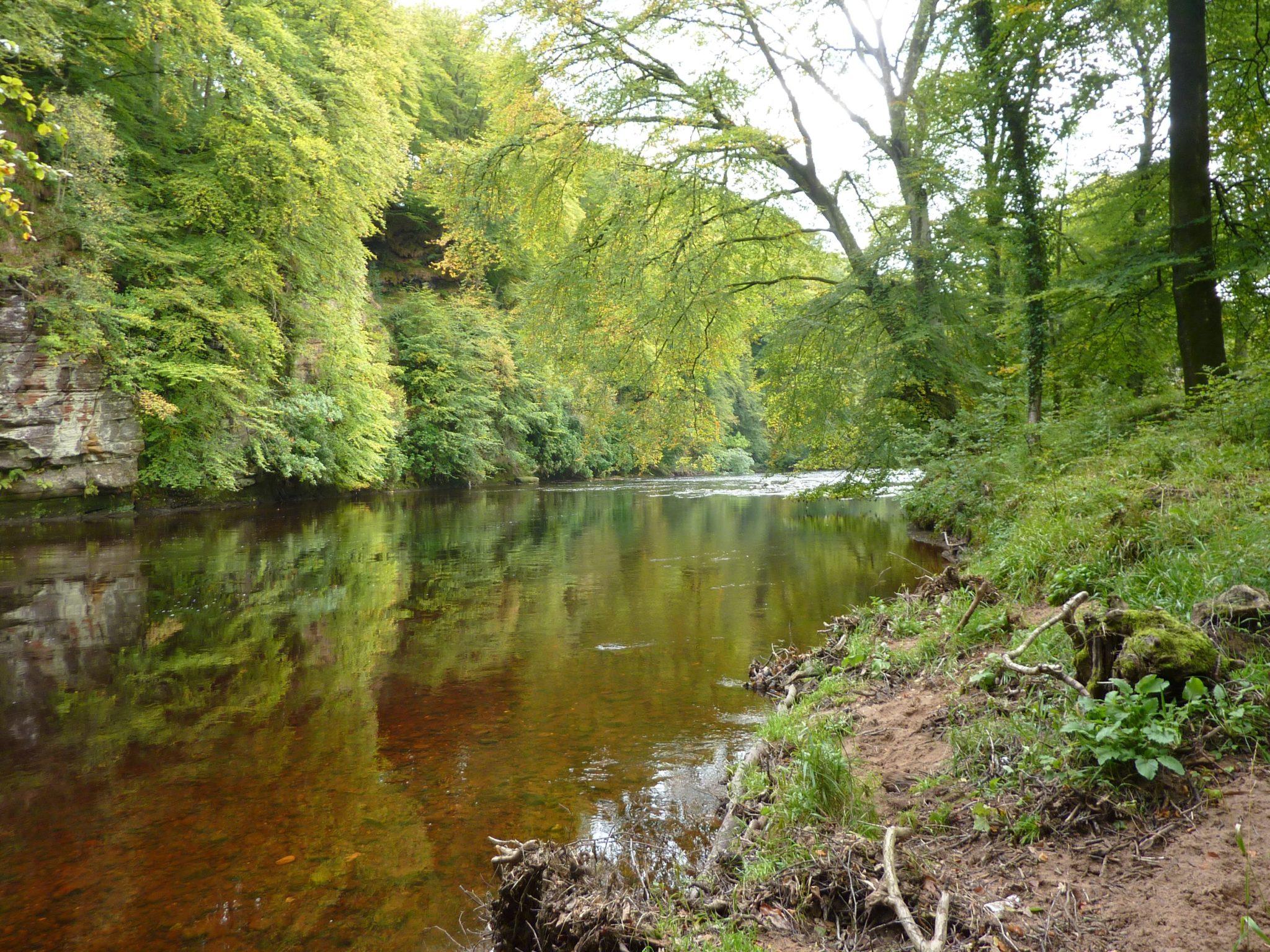 Ayr Gorge Woodlands - Scottish Wildlife Trust