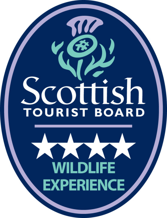 4 Star Wildlife Experience Logo