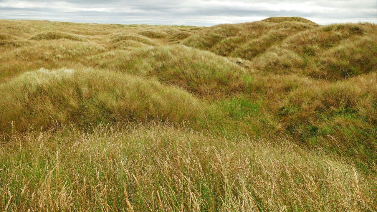 Concerns Over Planned Coul Links Golf Course Scottish Wildlife Trust