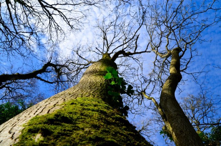 Trees at Blackcraig Wood