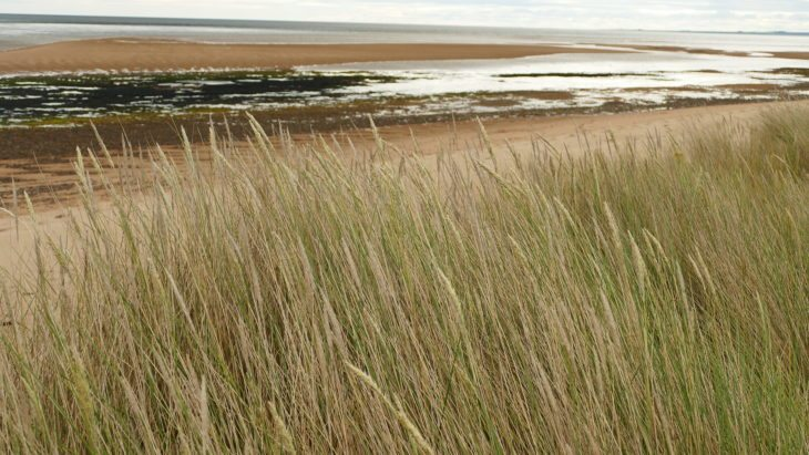 Sand dunes at Coul Links