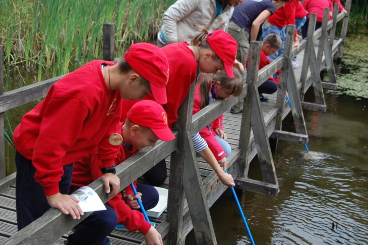 Pond dipping at Jupiter Urban Wildlife Centre