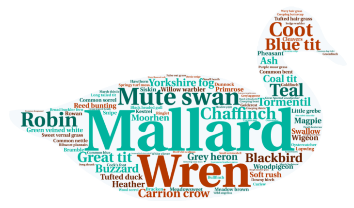 Top 100 wordcloud