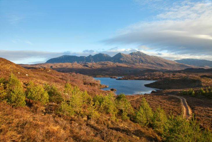 Scot's pine saplings with Quinag in background.