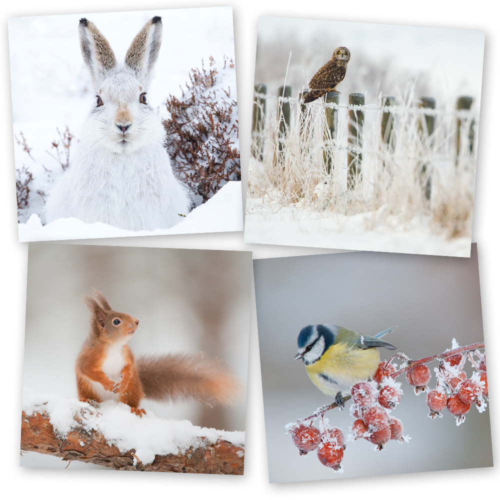 Wildlife Christmas Cards.Christmas Card Special Offer