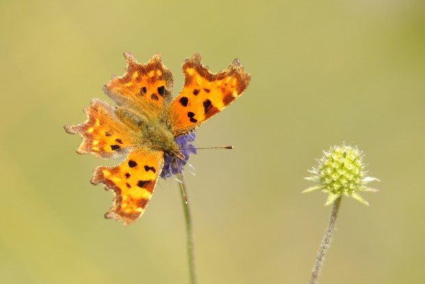 Comma ©Amy Lewis