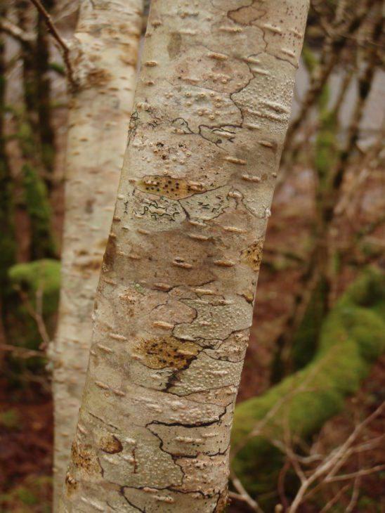 Crustose lichens © Brian and Sandy Coppins
