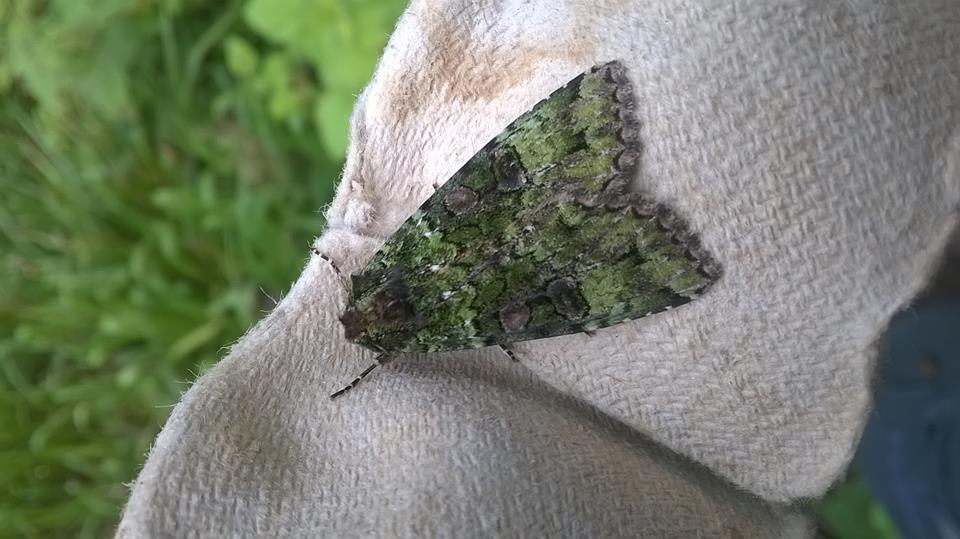 Why everyone should give moth trapping a go!