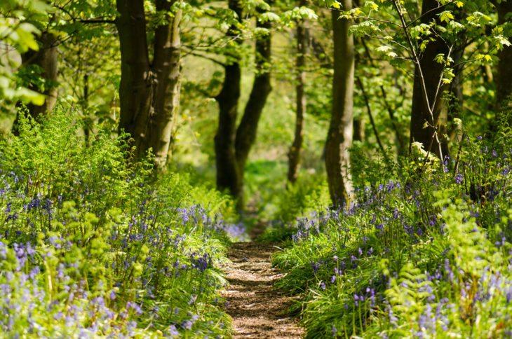 Bluebell woods, Cumbernauld Glen