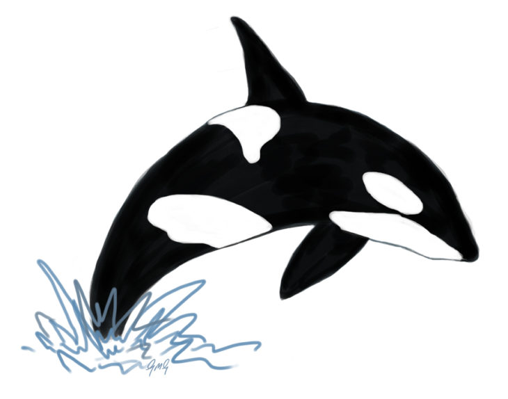 Orca by Gillian Gibson