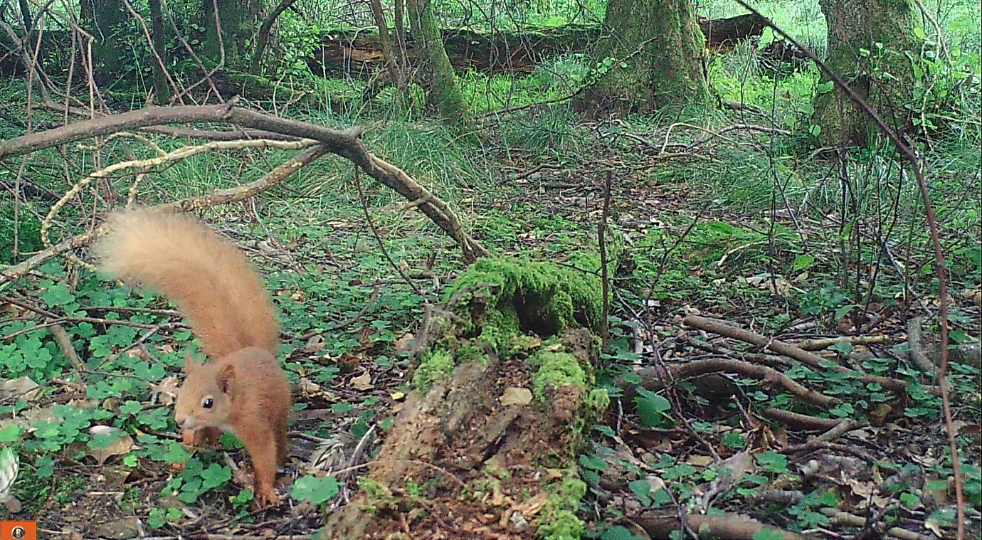 Camera traps and a spiky surprise!