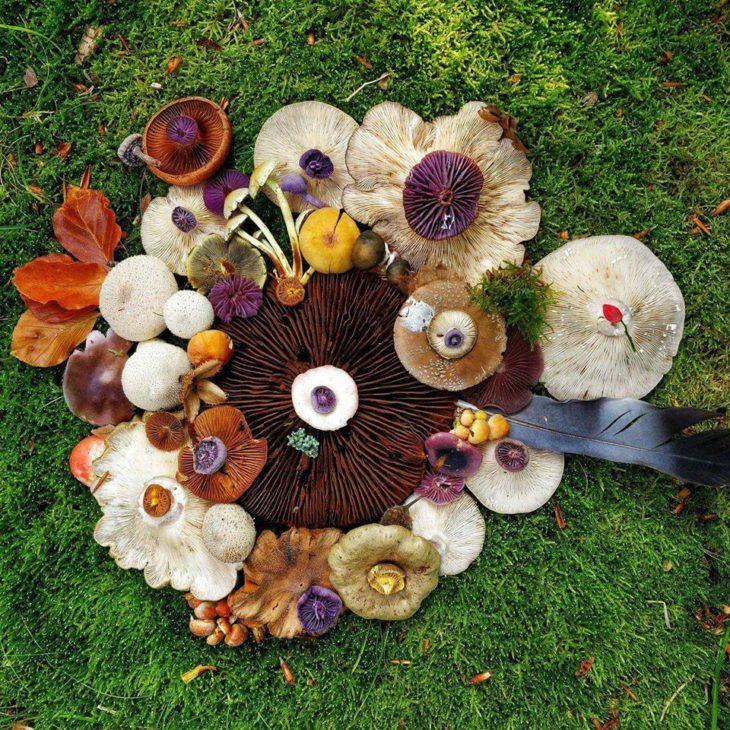 Mushroom Art ©Marie Schandorf Halberg