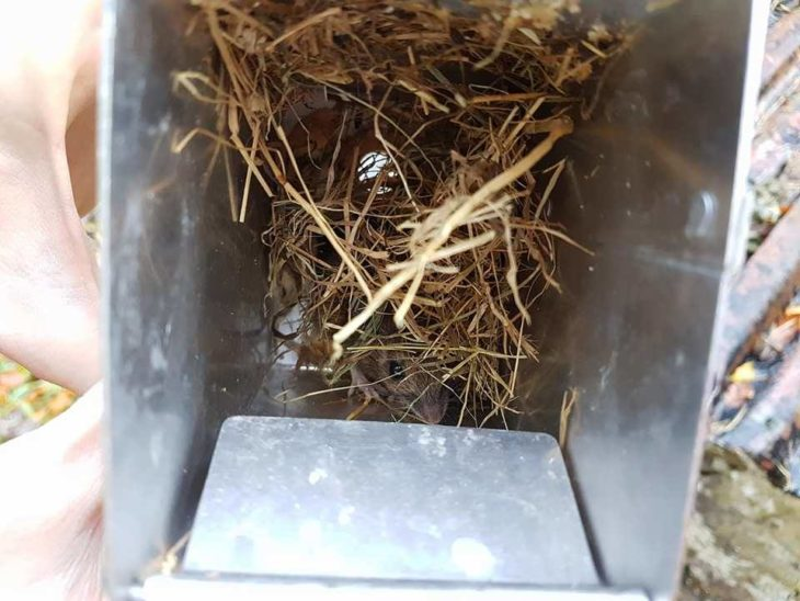 Wood mouse caught in Longworth trap ©Carina Marcussen