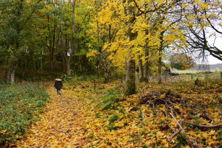 Walking through the leaves © Tom McIntosh