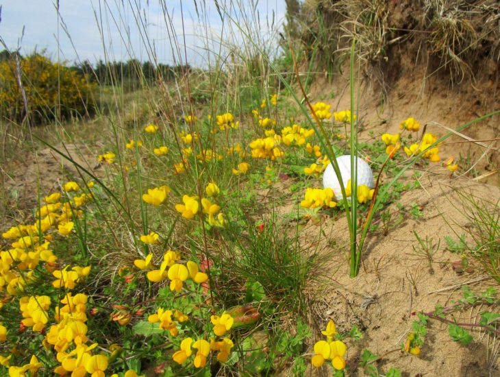 Golf ball surrounded by grannies toenails. ©Gill Smart