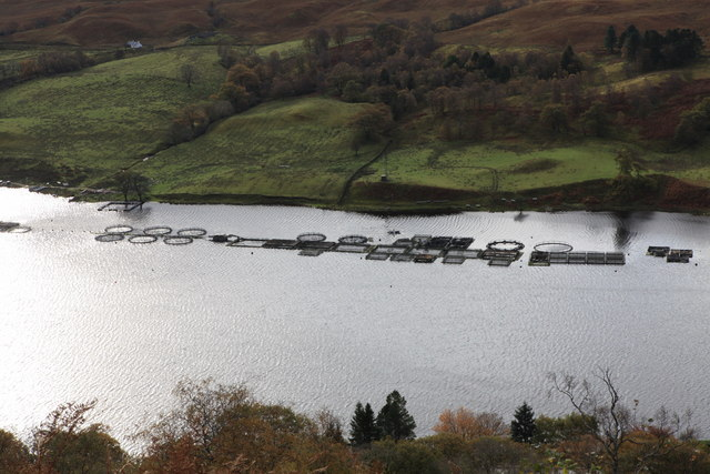 Time for change in Scottish salmon farming