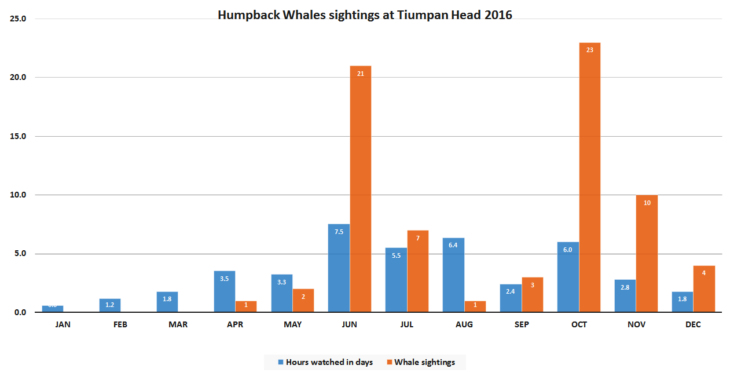 Humpback whale sightings at Tiumpan Head in 2016