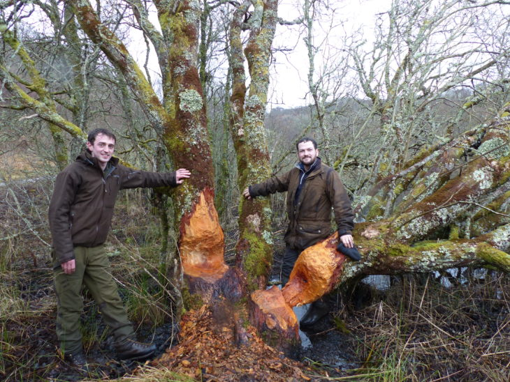 Ben Harrower and Rory Sandison in Knapdale Forest © Kirsty Grant, Scottish Beavers