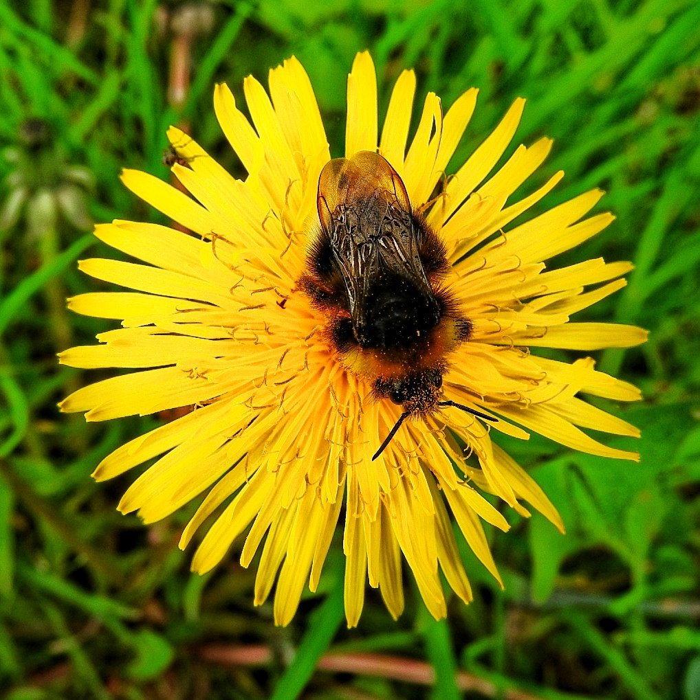 Helping pollinators as spring arrives
