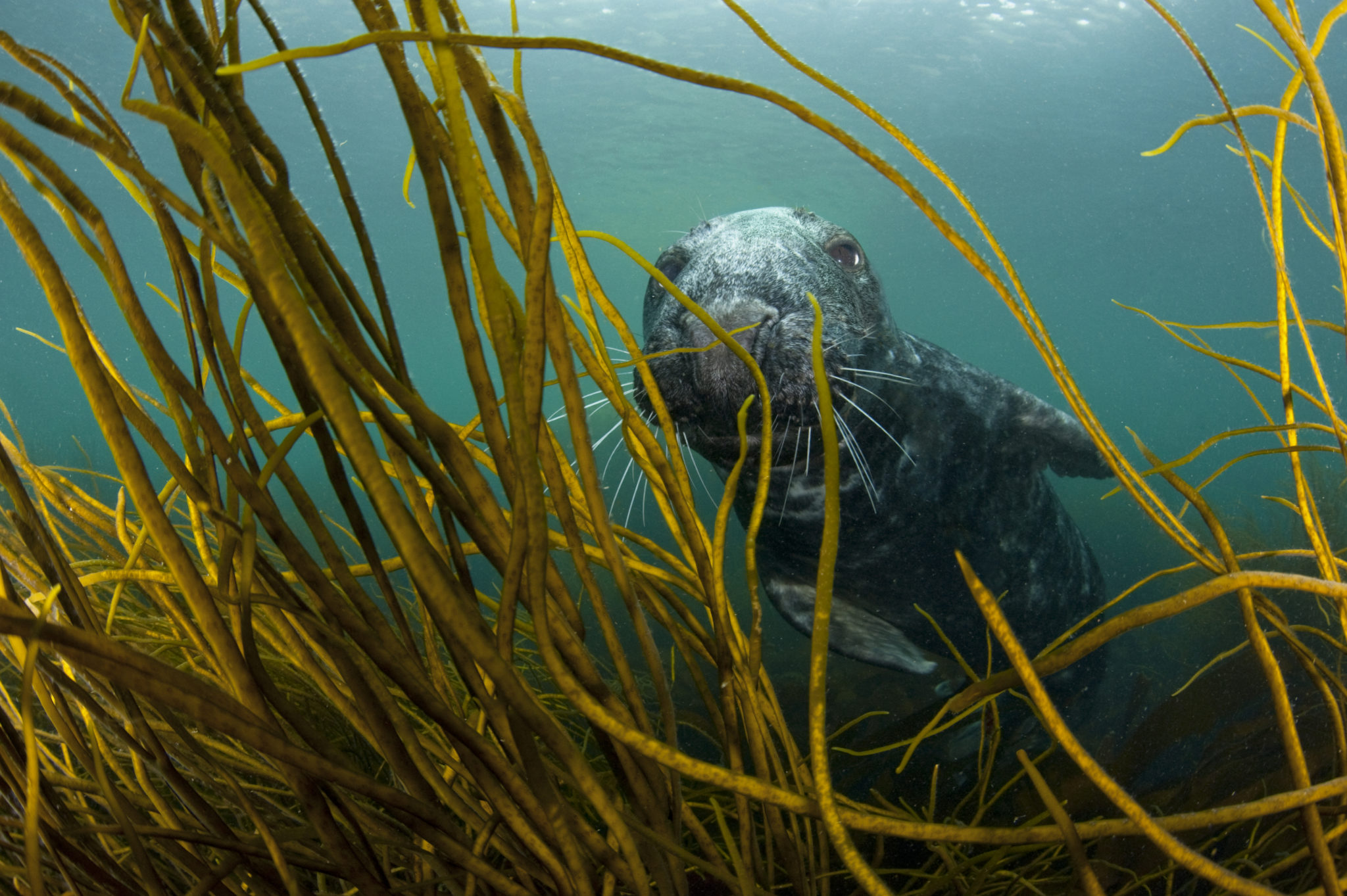 Jonny Hughes: Why it's time to stop plundering the seas for kelp