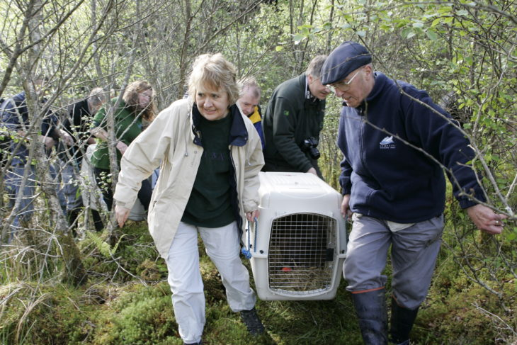 Roseanna Cunningham MSP helping to release a beaver into Knapdale Forest in 2009. © Scottish Beaver Trial