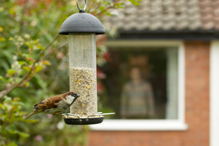 Sparrow on feeder © Ben Hall/2020VISION