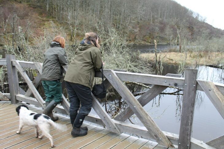 Viewing the beaver influenced habitat at the Dubh loch from the boardwalk. © Ben Harrower, Scottish Beavers.