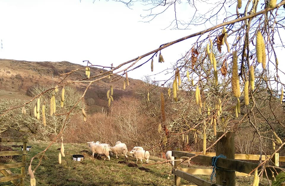 The Flying Flock lands at Keltneyburn