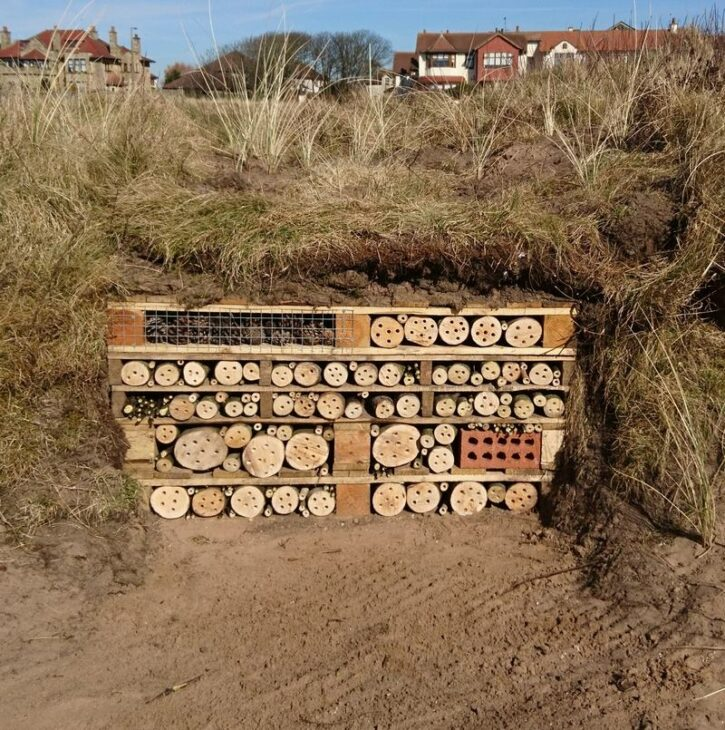 Bug hotel © Harry Richards
