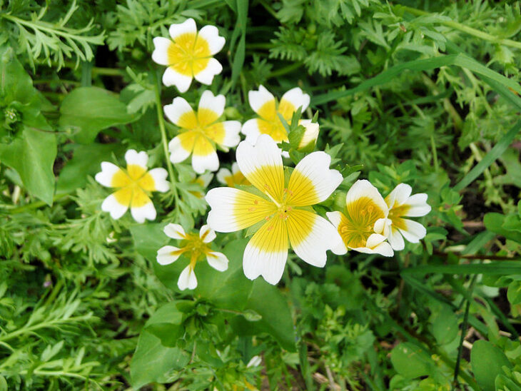 Poached egg plant © Paul Smith