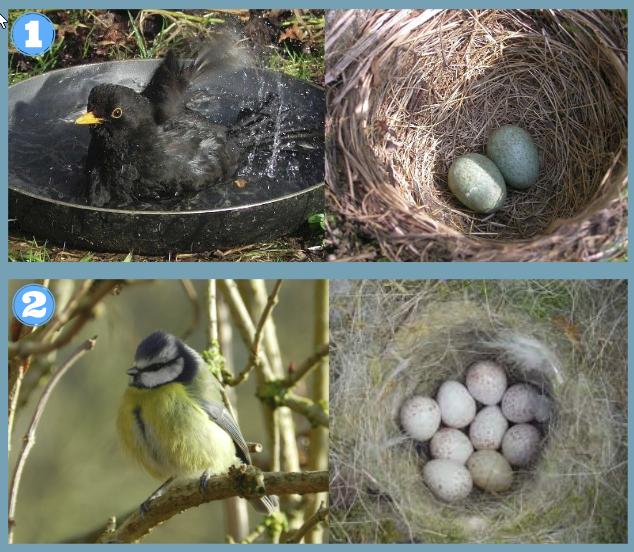 Identifying Birds Eggs Scottish Wildlife Trust