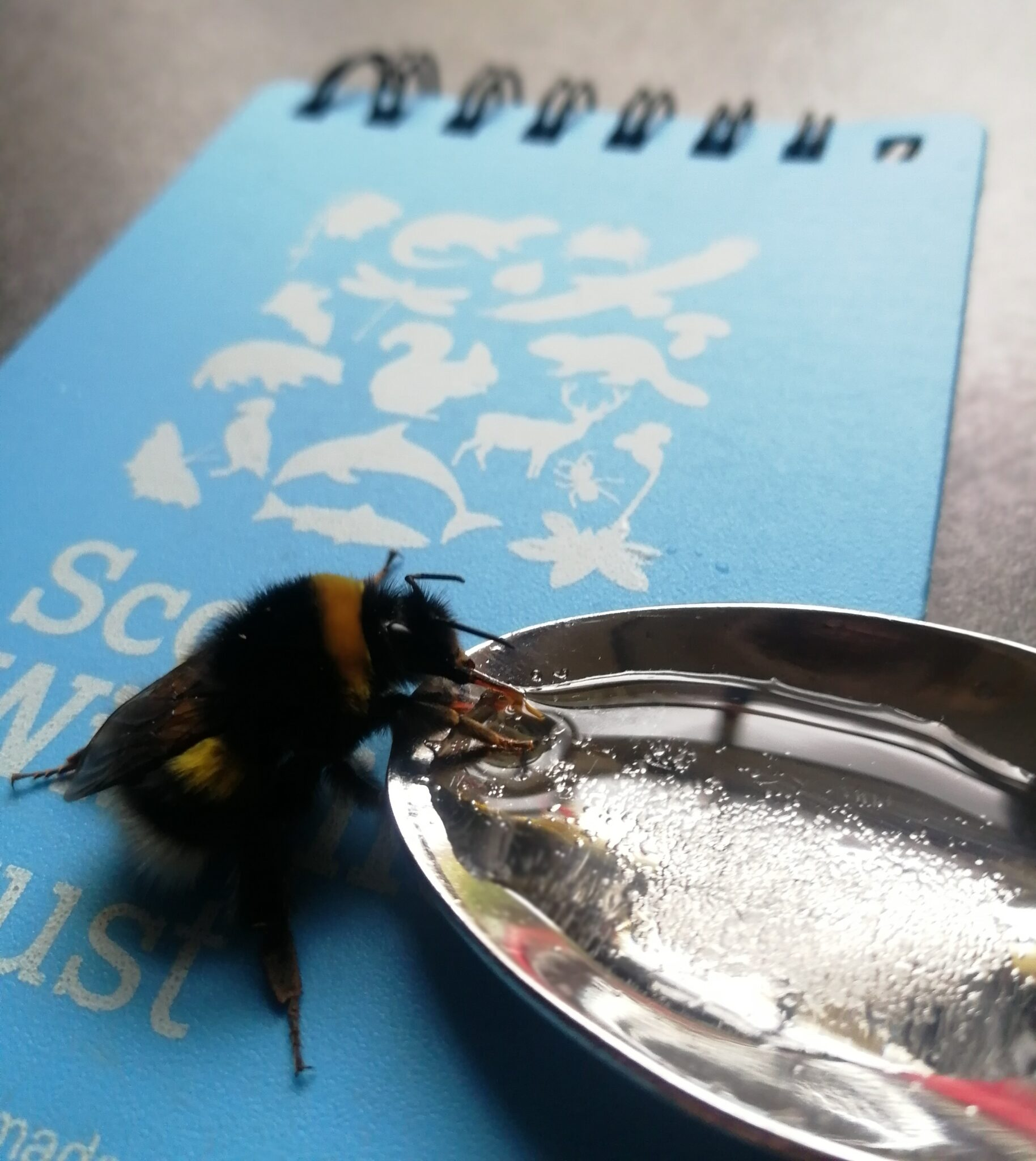 The Do's and Don'ts of Bee Thirst Aid