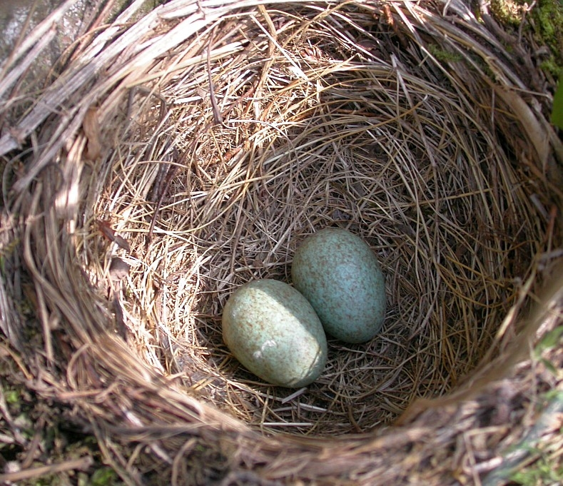 Identifying Birds' Eggs