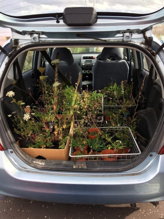 Plants delivered from Granton Hub wildflower nursery -  a joint venture with RBGE -  ready for planting out into Seafield grassland © Leonie Alexander / RGBE