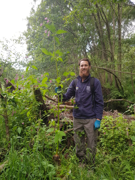 Assistant Ranger with Himalayan Balsam ©Helen Lancaster