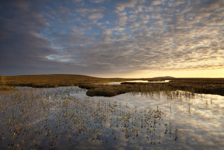 Bogbean growing in pool on peatland at dawn © Mark Hamblin/2020VISION