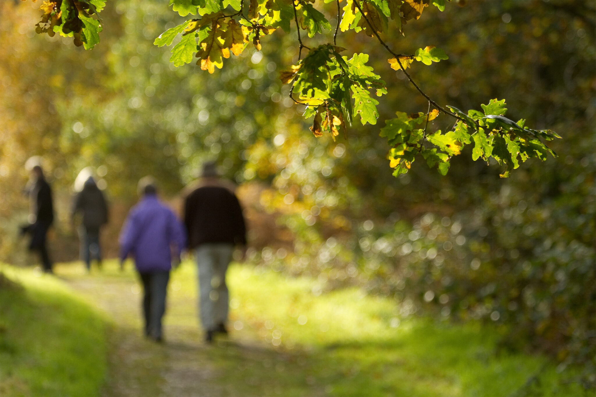 Couple walking down path through woodland