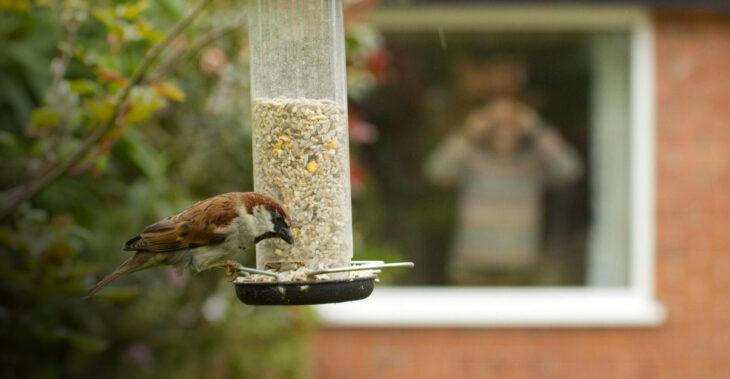 Window birdwatching © Ben Hall/2020VISION