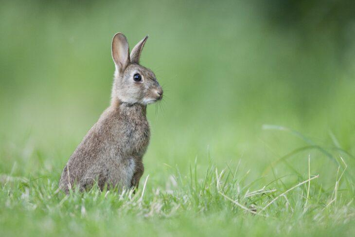 Rabbit © Guy Edwardes/2020VISION
