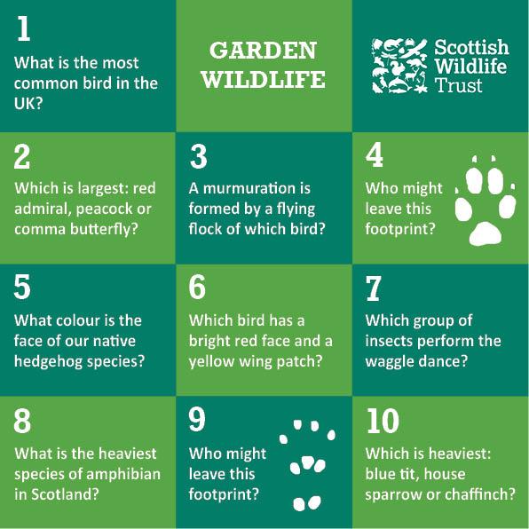 Wild Trivia - garden wildlife
