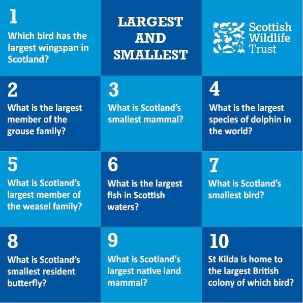 Wild Trivia - largest and smallest © Scottish Wildlife Trust