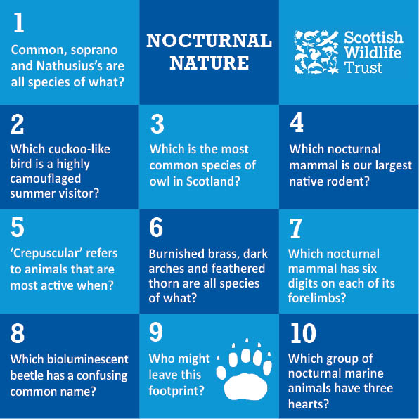 Trivia - nocturnal nature © Scottish Wildlife Trust