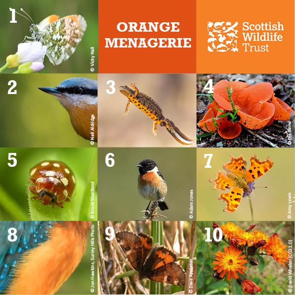 Trivia - Orange Menagerie
