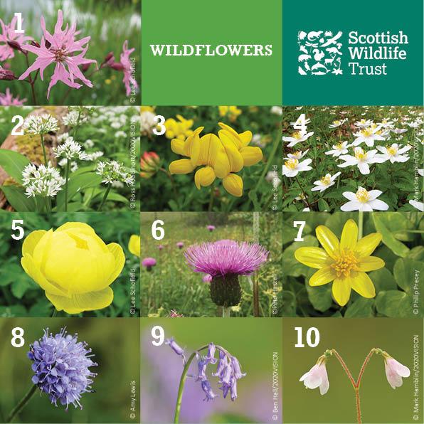 Trivia - wildflowers