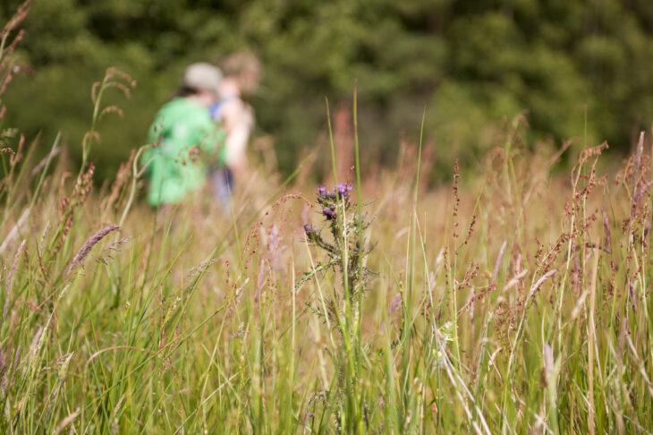 Long grass © Ross Hoddinott/2020VISION