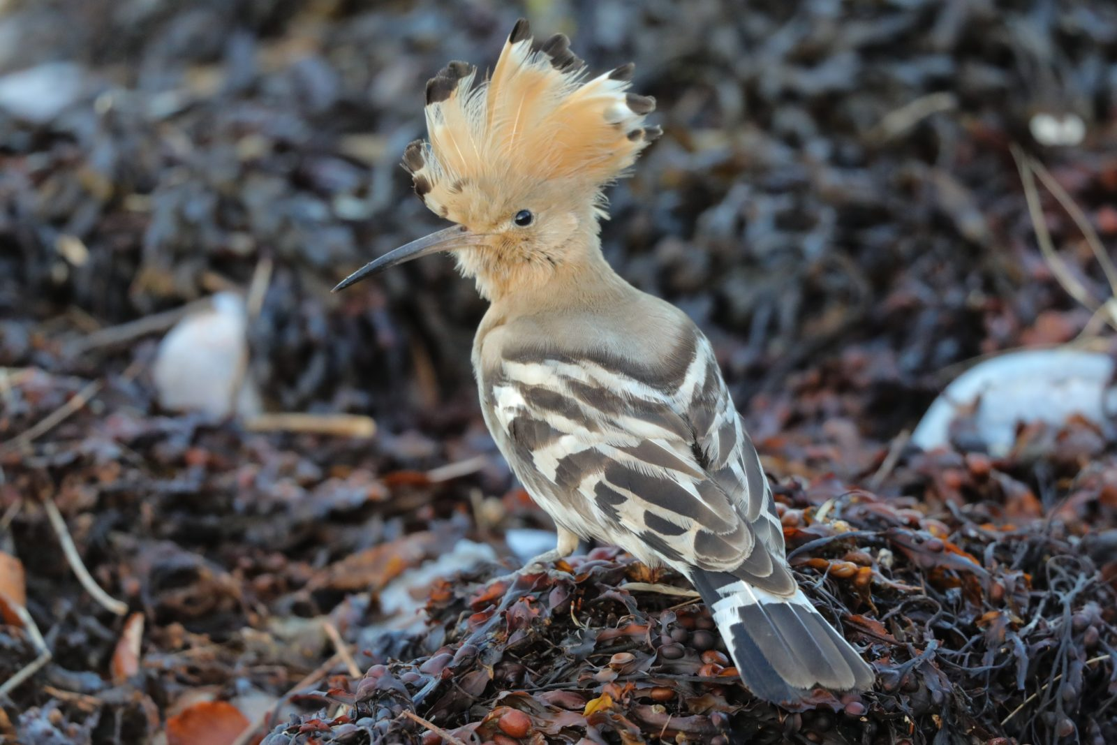 What's the rarest bird we've seen at Montrose Basin?