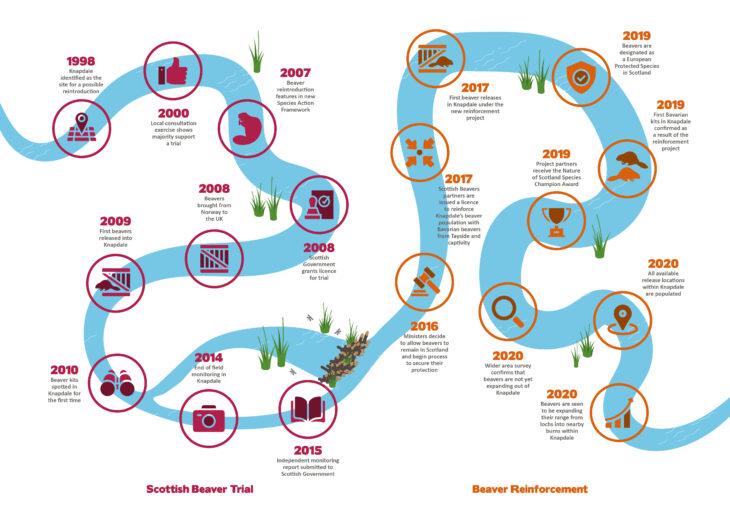 Scottish Beavers - Timeline