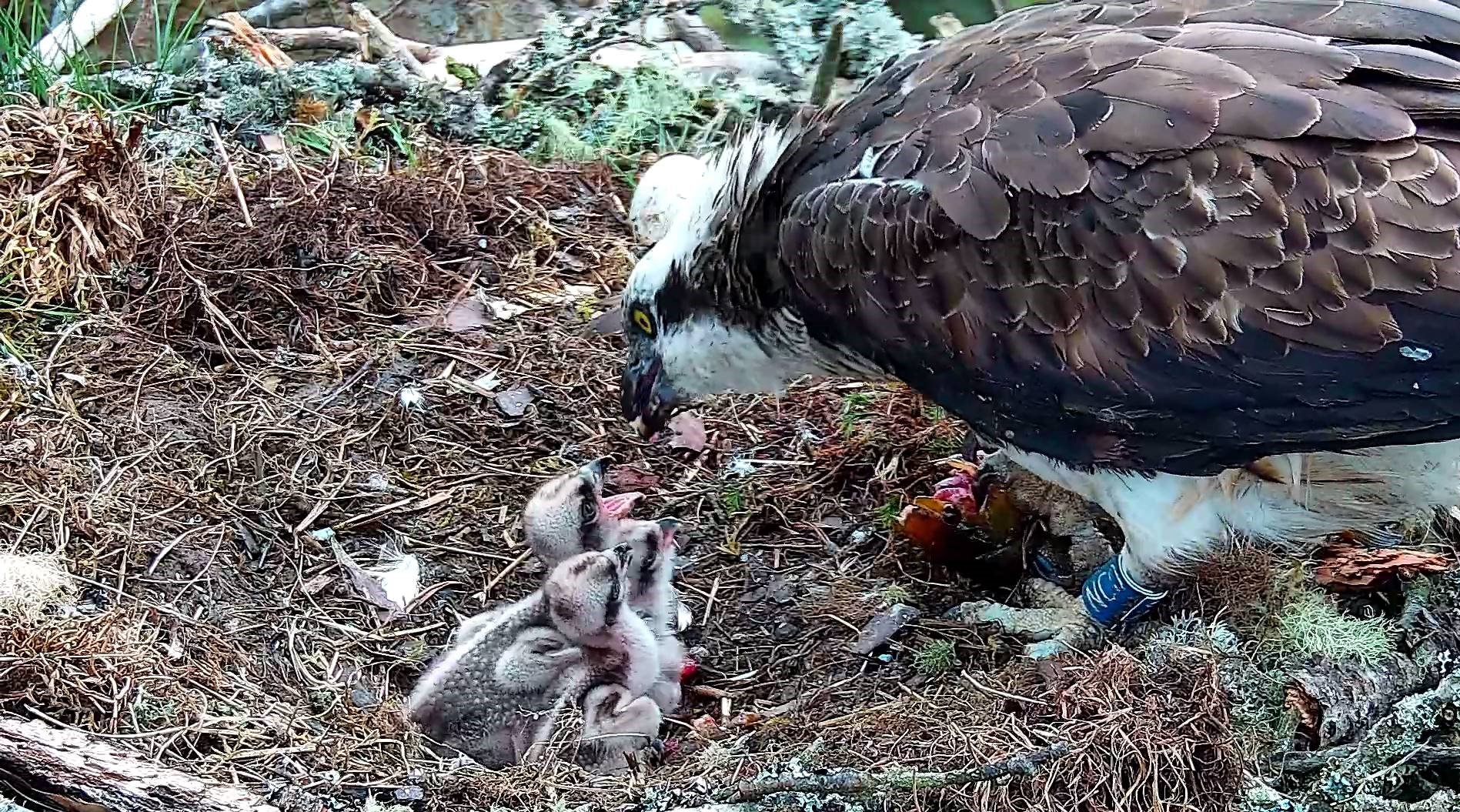 Sad news about our third chick