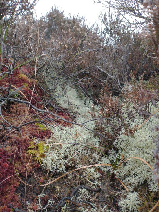 Close up of ground level bog vegetation.